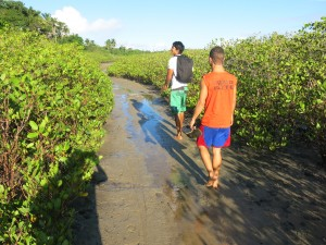 Into the Mangrove